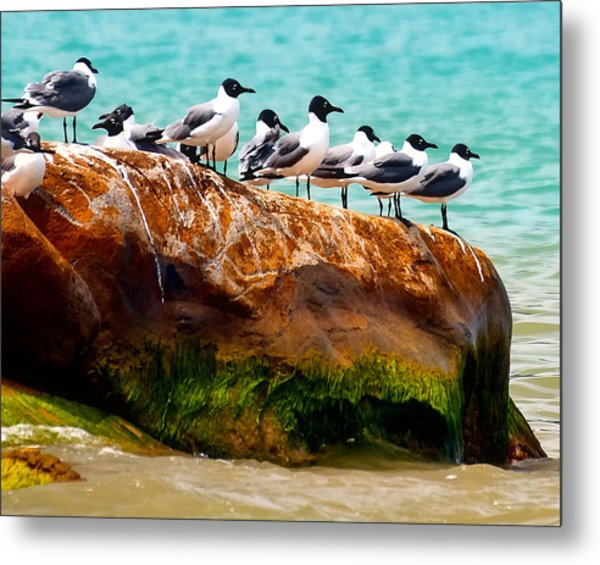 Seagull Cliff Metal Print