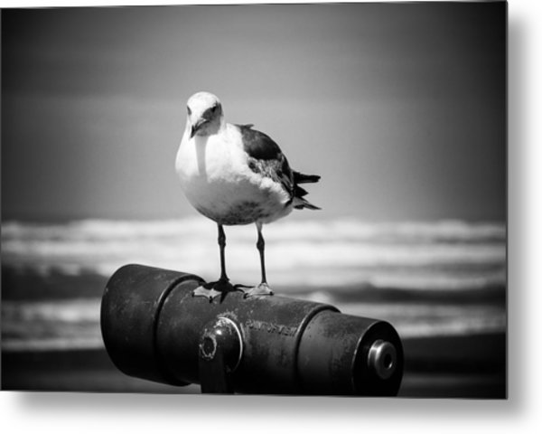 Seagull In Black And White Metal Print