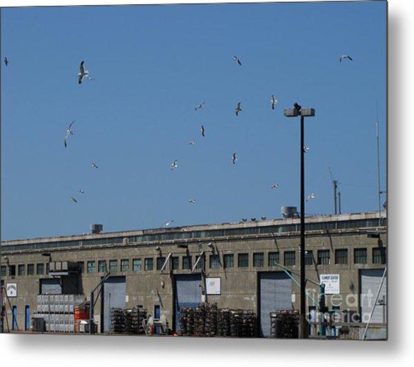 Seagulls By The Pier Metal Print by Serena Ballard
