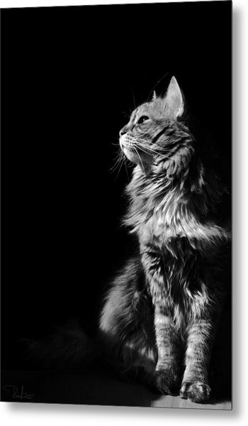 Searching The Sun Metal Print