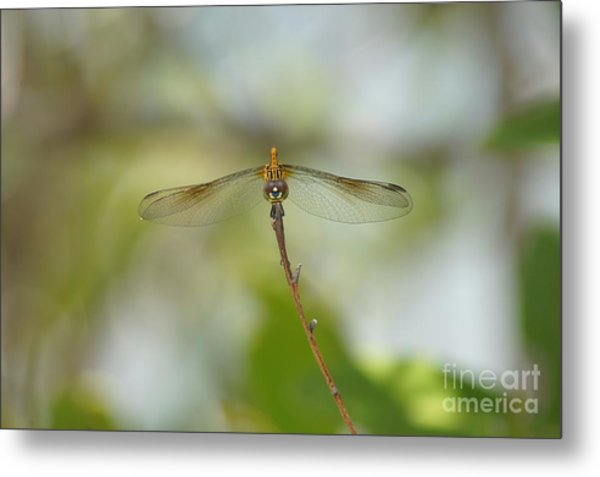 Seaside Dragonlet Metal Print by Lynda Dawson-Youngclaus