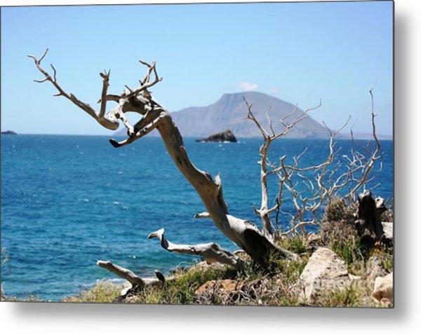 Seaside Tree Metal Print by Phoenix Michael  Davis