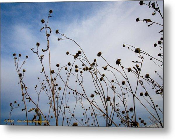 Seeds To Be Sewn Metal Print by Dan Crosby