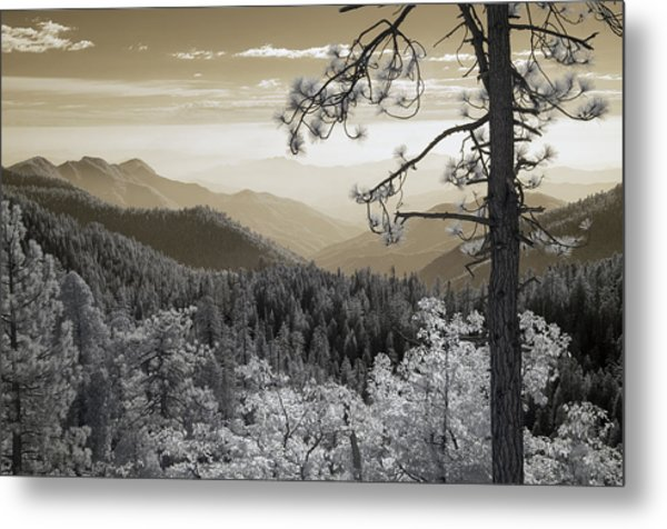 Sequoia View Metal Print