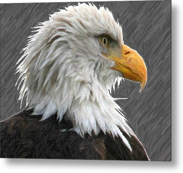 Serious Eagle Metal Print by Carrie OBrien Sibley