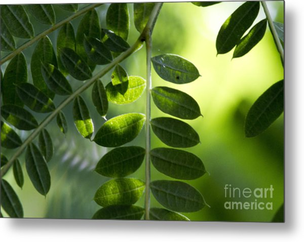 Shadow On Leaf -5 Metal Print