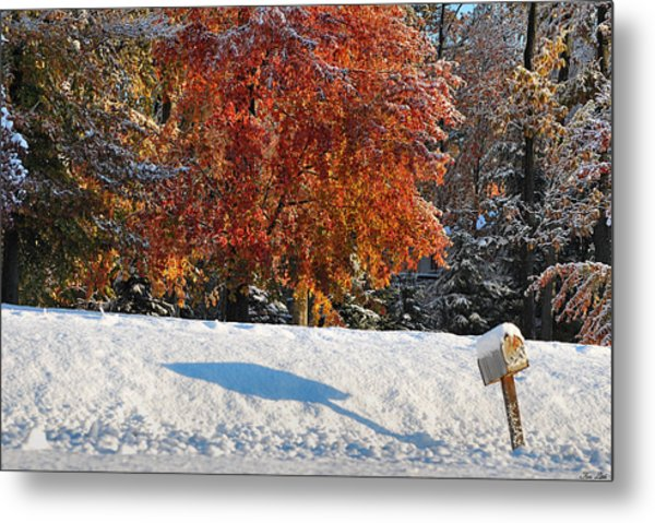Shadows In The Snow Metal Print by Kimberly Little