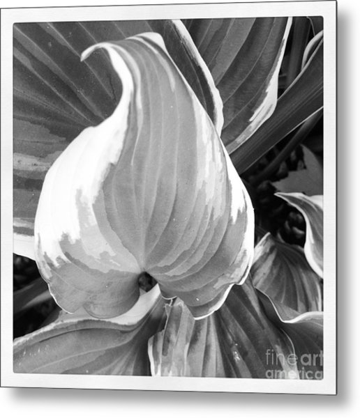 Shape Metal Print by Susan Wood