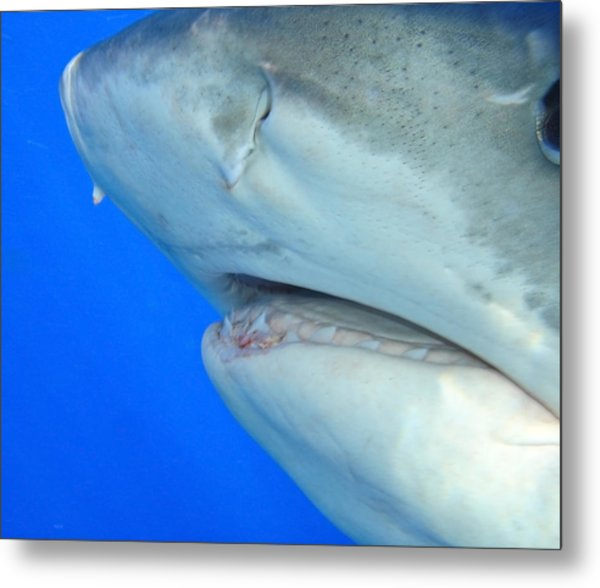 Shark Up Close And Personal Metal Print
