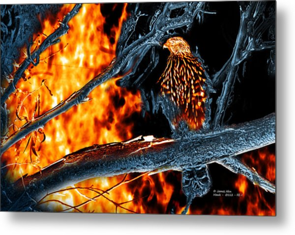 Sharp Shinned Hawk 0112 Fire And Ice Art Metal Print