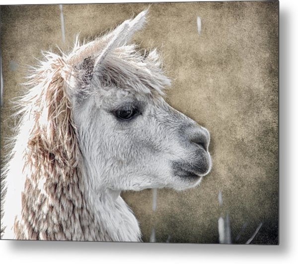 She Walks In Beauty Metal Print