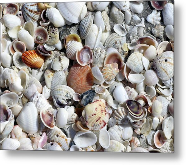 Shells On The Beach Metal Print