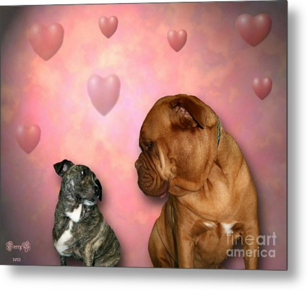 Shelter Dogs Metal Print
