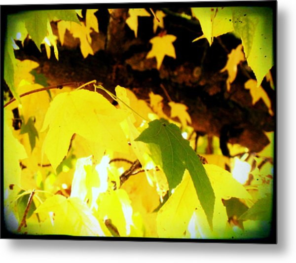 Shimmery Yellow Metal Print by Lee Yang