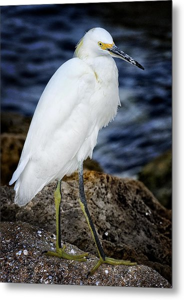 Shore Bird Metal Print by Ercole Gaudioso