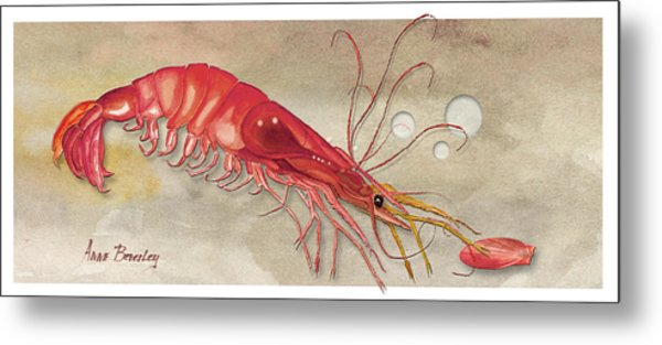 Shrimp With Red Shell Metal Print