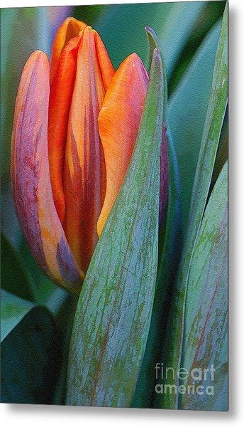 Shy Tulip Metal Print