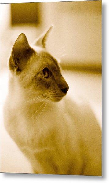 Siamese Feline Metal Print