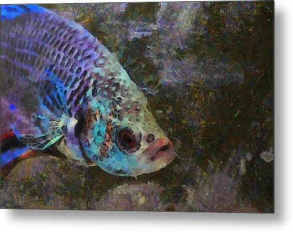 Siamese Fighting Fish Metal Print