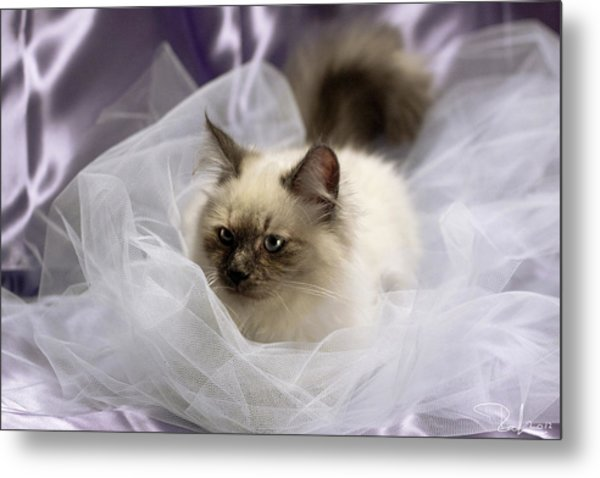 Siberian Kitty On Lilac Metal Print