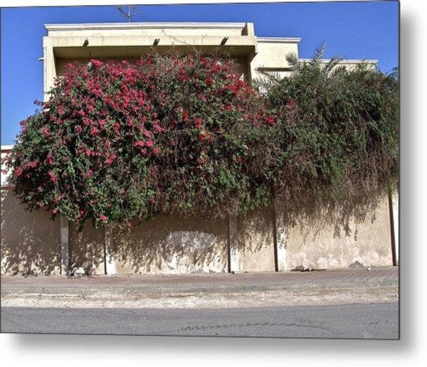 Sidewalk Florae In Doha Metal Print by David Ritsema