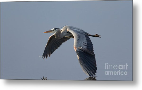 Silent Flight Metal Print
