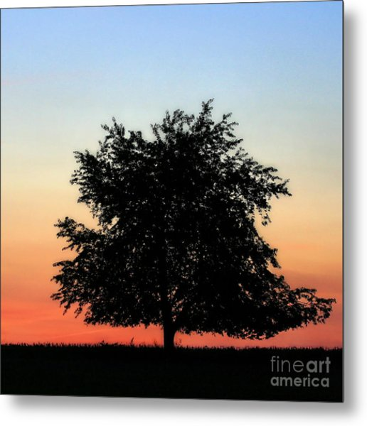 Make People Happy  Square Photograph Of Tree Silhouette Against A Colorful Summer Sky Metal Print