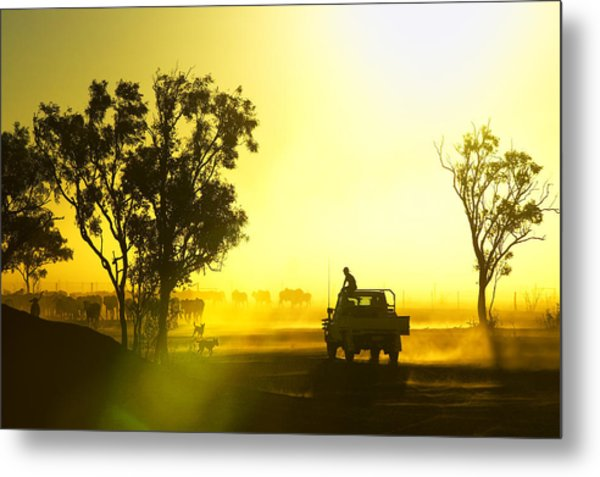 Silhouetted Cattle Muster At Sunset, Armraynald Station Metal Print by Johnny Haglund
