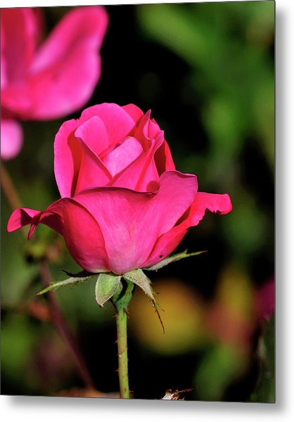 Simple Red Rose Metal Print