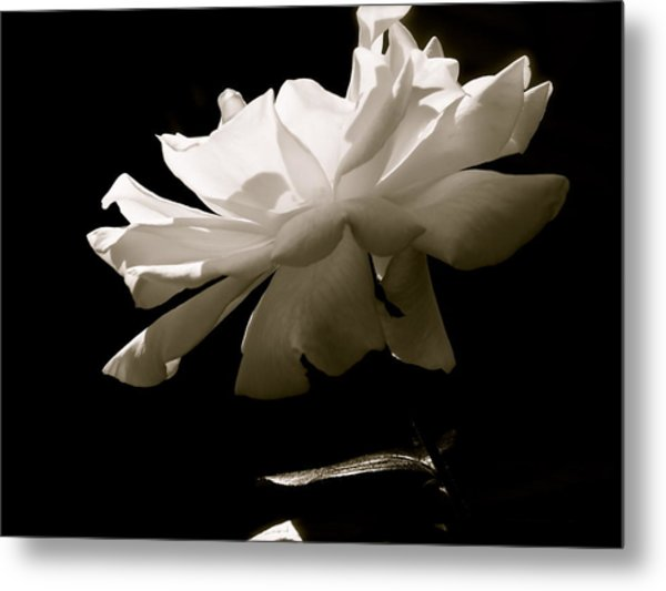 Simplistic Beauty In The Morning Metal Print by Gloria Warren
