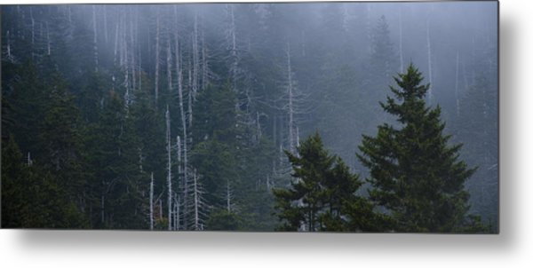 Skeletons In The Mist Metal Print