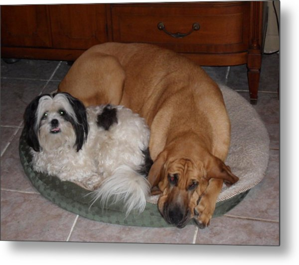 Sleeping In A Circle Metal Print by Val Oconnor