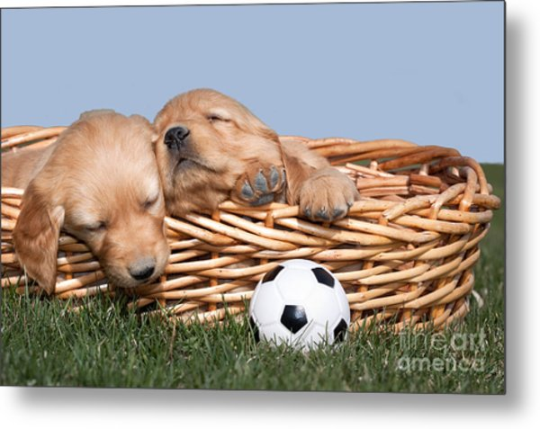 Sleeping Puppies In Basket And Toy Ball Metal Print