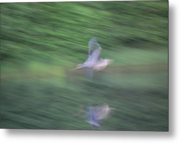 Slow Evening Shutter Metal Print