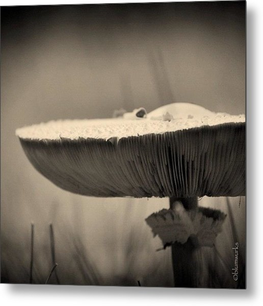 ...small Visitors Metal Print