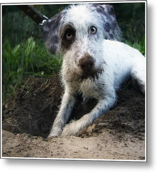 Small White Dog Metal Print