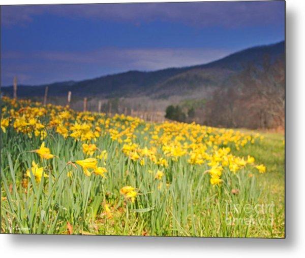 Smoky Mountain National Park Daffodil Spring Metal Print