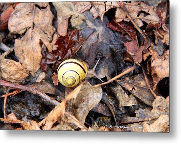 Snail In The Leaves Metal Print by Carolyn Postelwait