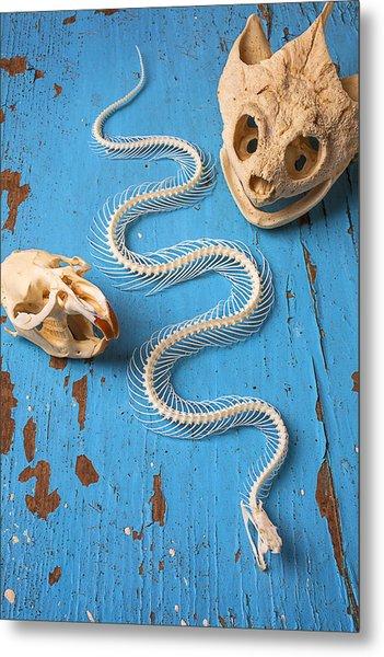 Snake Skeleton And Animal Skulls Metal Print
