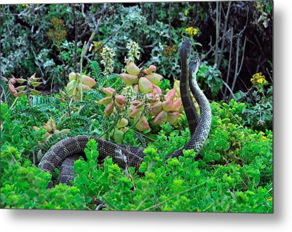 Snakes In The Grass Metal Print by Richard Leon