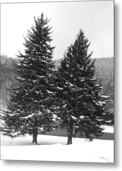 Snow Covered Trees Metal Print by Carrie Munoz