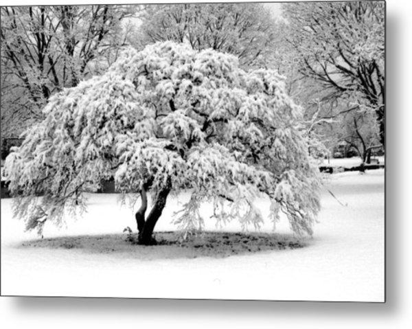 Snow In Connecticut Metal Print