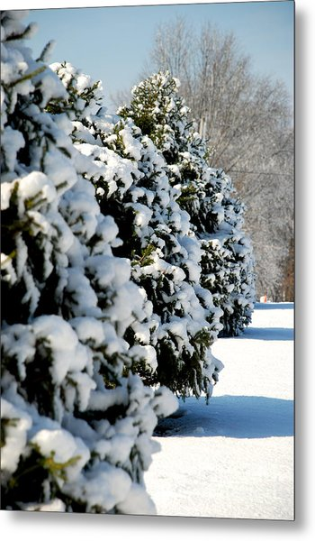 Snow In The Trees Metal Print