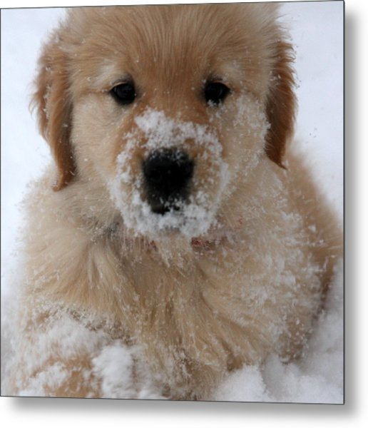 Snow Puppy Metal Print