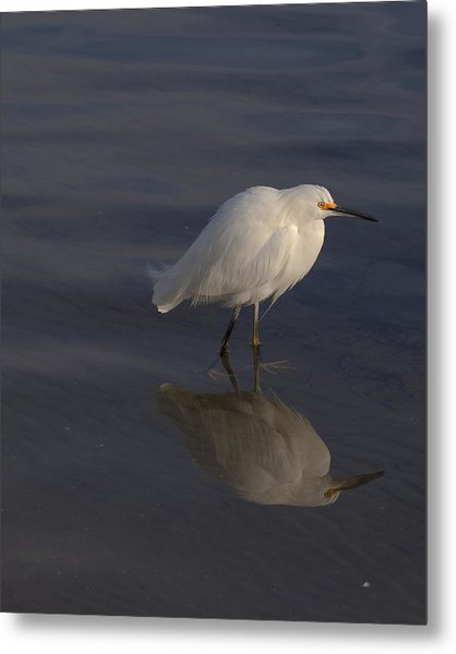 Snowy Egret With Reflection Metal Print