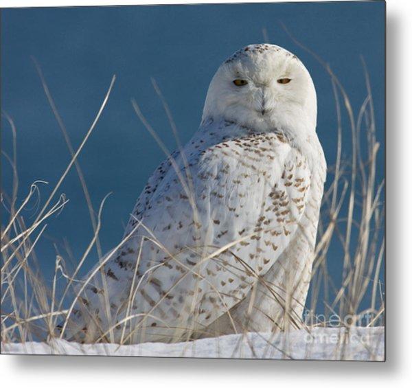 Snowy Owl Profile Metal Print