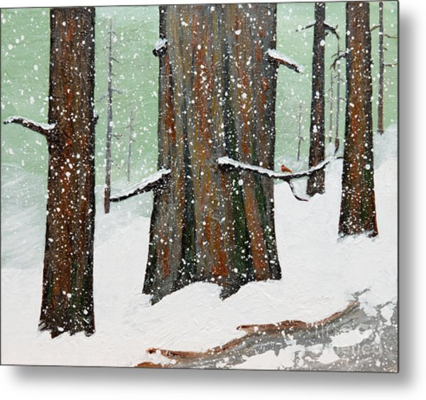 Snowy Redwood Metal Print