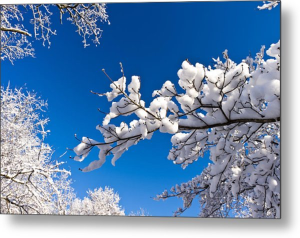 Snowy Trees And Blue Sky Metal Print