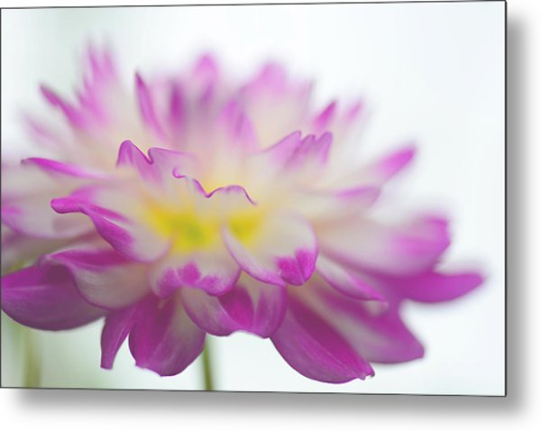 Softness Metal Print by Michelle Armstrong