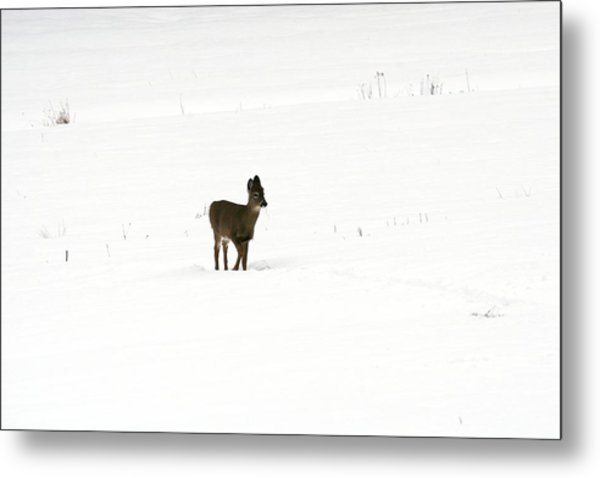 Solitude Metal Print by Shirley Mailloux
